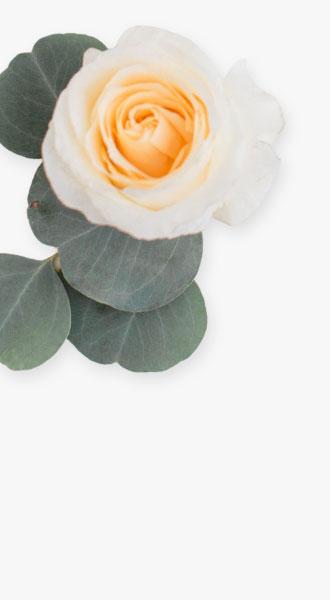 wedding catering background flower left